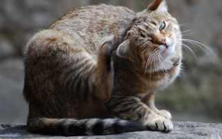 Разновидности кожных заболеваний у кошек и методы их лечения