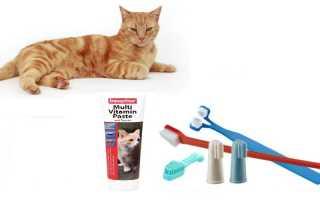 Как чистить зубы кошке — все о гигиене полости рта у кошек