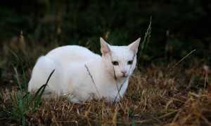 Как удачно назвать белого котенка мальчика и девочку