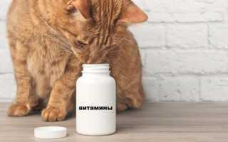 Как подобрать витамины для котов и кошек
