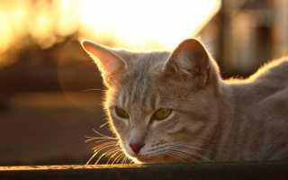 9 жизней у кошек. Правда или Вымысел?