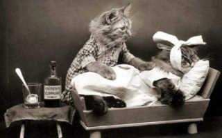 Луч надежды для кошек со смертельно опасной болезнью