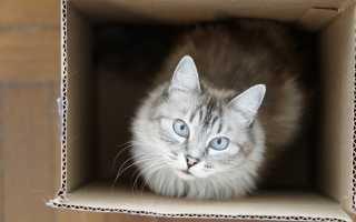 Почему коты и кошки любят коробки и пакеты