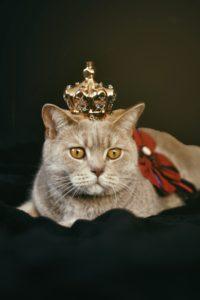 кот с короной на голове