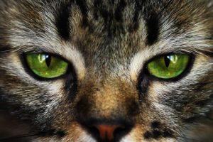 здоровые глаза у кошки