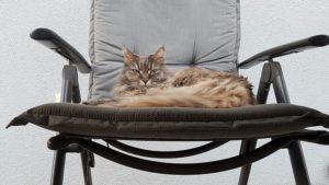 мейн кун в кресле
