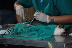 хирургическое вмешательство при болезни печени у кошек