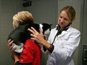 Диагностика болезни печени у кошек