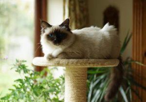 собственный уголок для кошки