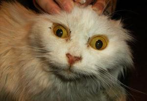 желтуха глаз
