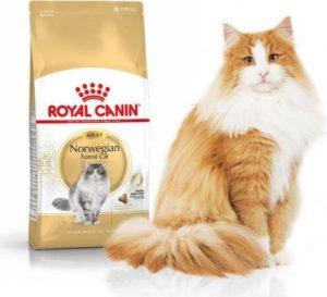 корм royal canin для норвежской лесной кошки