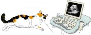 узи сердца у кошки