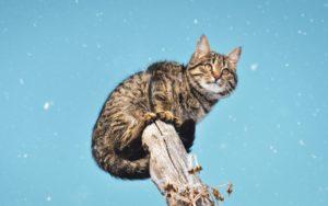 кошка устроилась выше хозяйских голов
