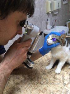 осмотр глаза у кошки