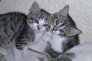 клички котов из мультфильмов