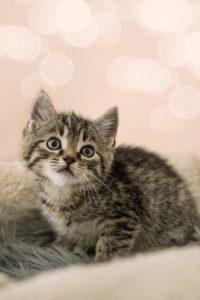 подросток котенок
