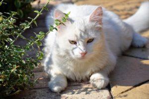 приметы про белого кота