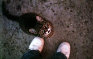 общение кошки и человека