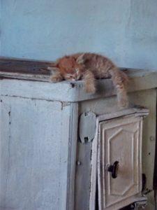 кошка спит на печи приметы