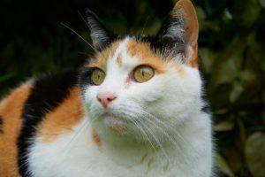 приметы про трехцветных кошек