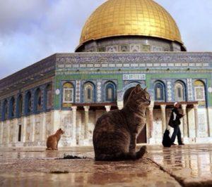 кошки у мусульман