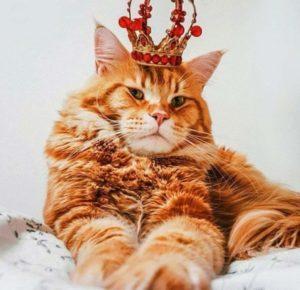 кот Тибальд