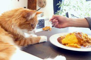 питание при гингивите у кошек