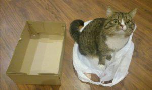 кот сидит на пакете