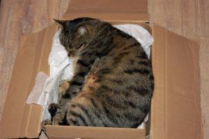 кот спит в коробке