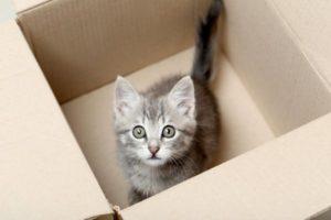 котенко в коробке