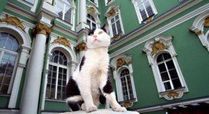 эрмитажне коты