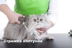 как выстричь колтуны